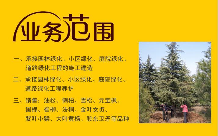 承接福彩3d字迷、小区绿化、庭院绿化、道路绿化工程的施工建造及养护 销售:各种苗木花卉